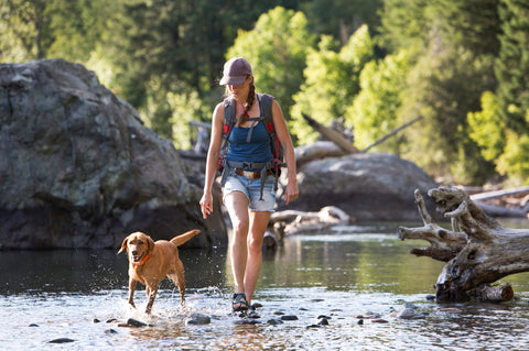 Hiker and her dog walking on a trail, why dogs may be licking their paws concept