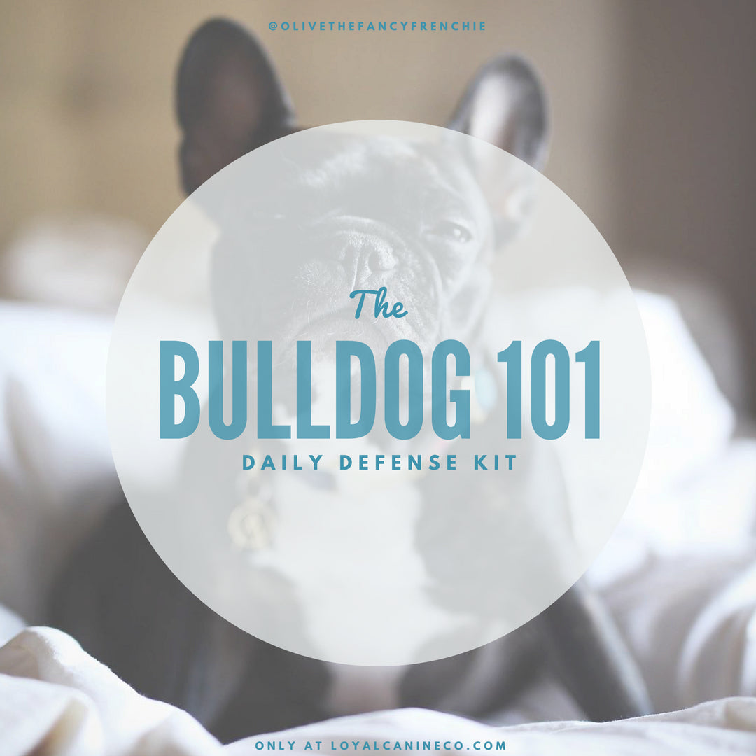 Dog Grooming Kit - Bulldog 101