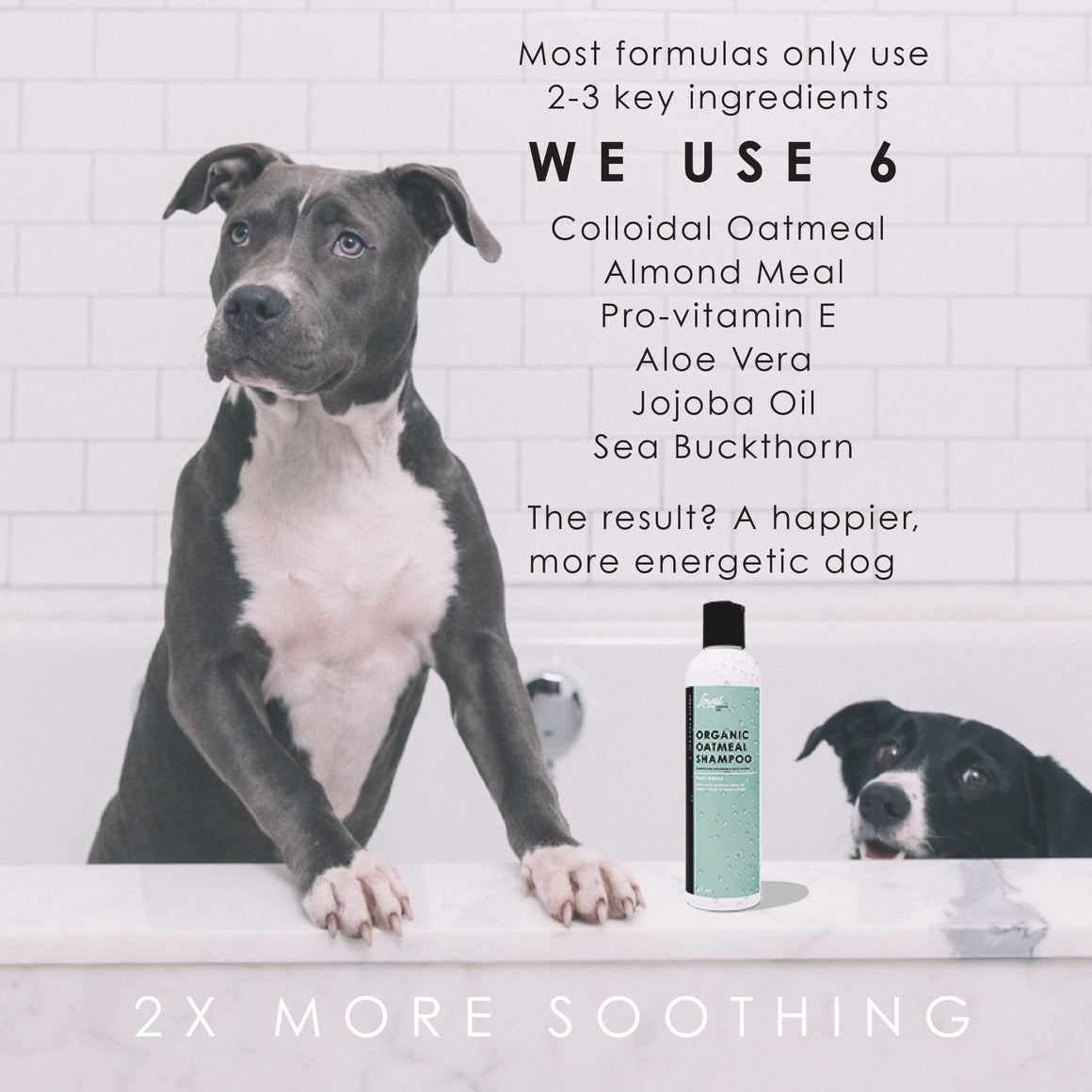 Organic Oatmeal Shampoo (Available on Amazon.ca) -   - Loyal Canine Company - all natural dog products