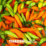 Thresh Seed Co Aji amarillo chile pepper