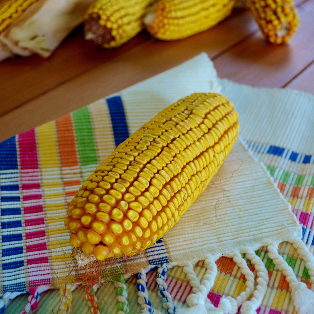 Cooks Early Yellow Dent Corn