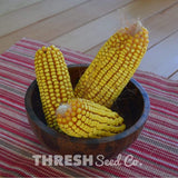 Cooks Early Yellow Dent Corn in bowl