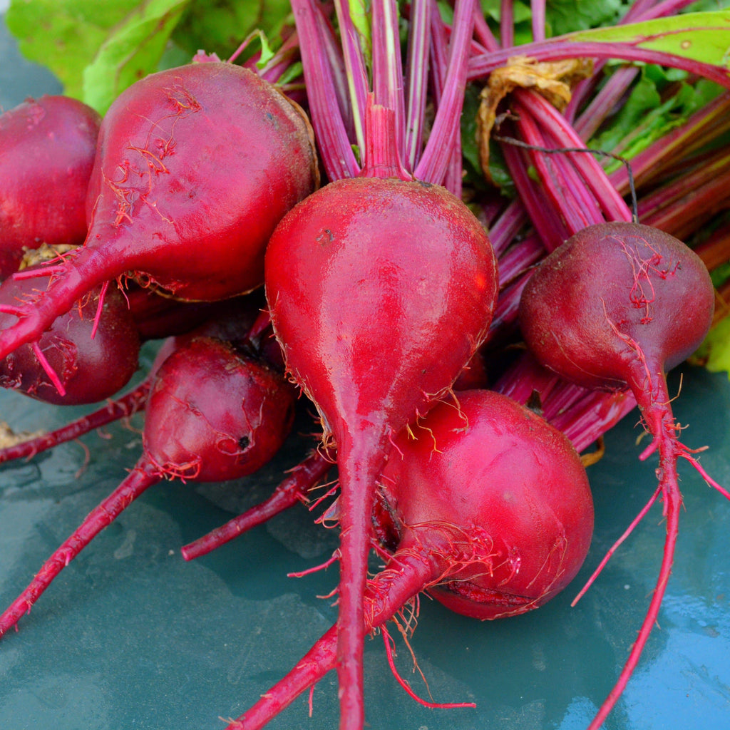 Early Wonder Beets