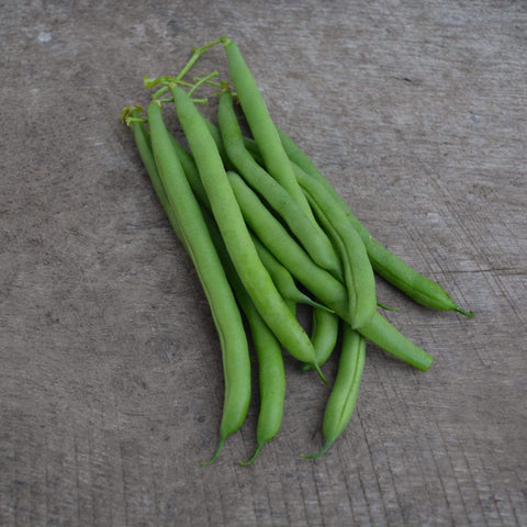 Empress Snap Bean seeds