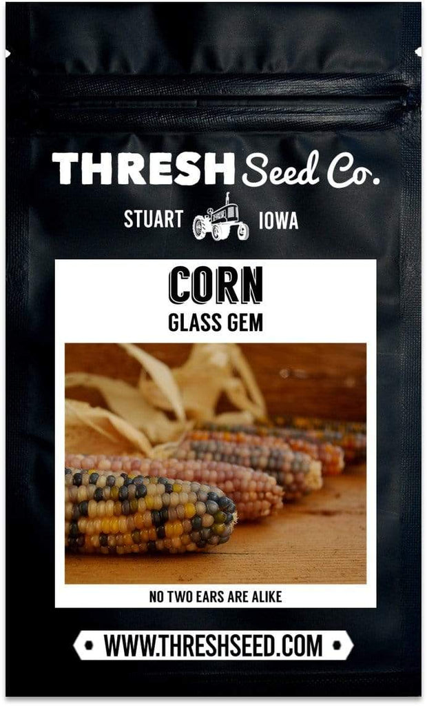 Glass Gem Corn Seeds