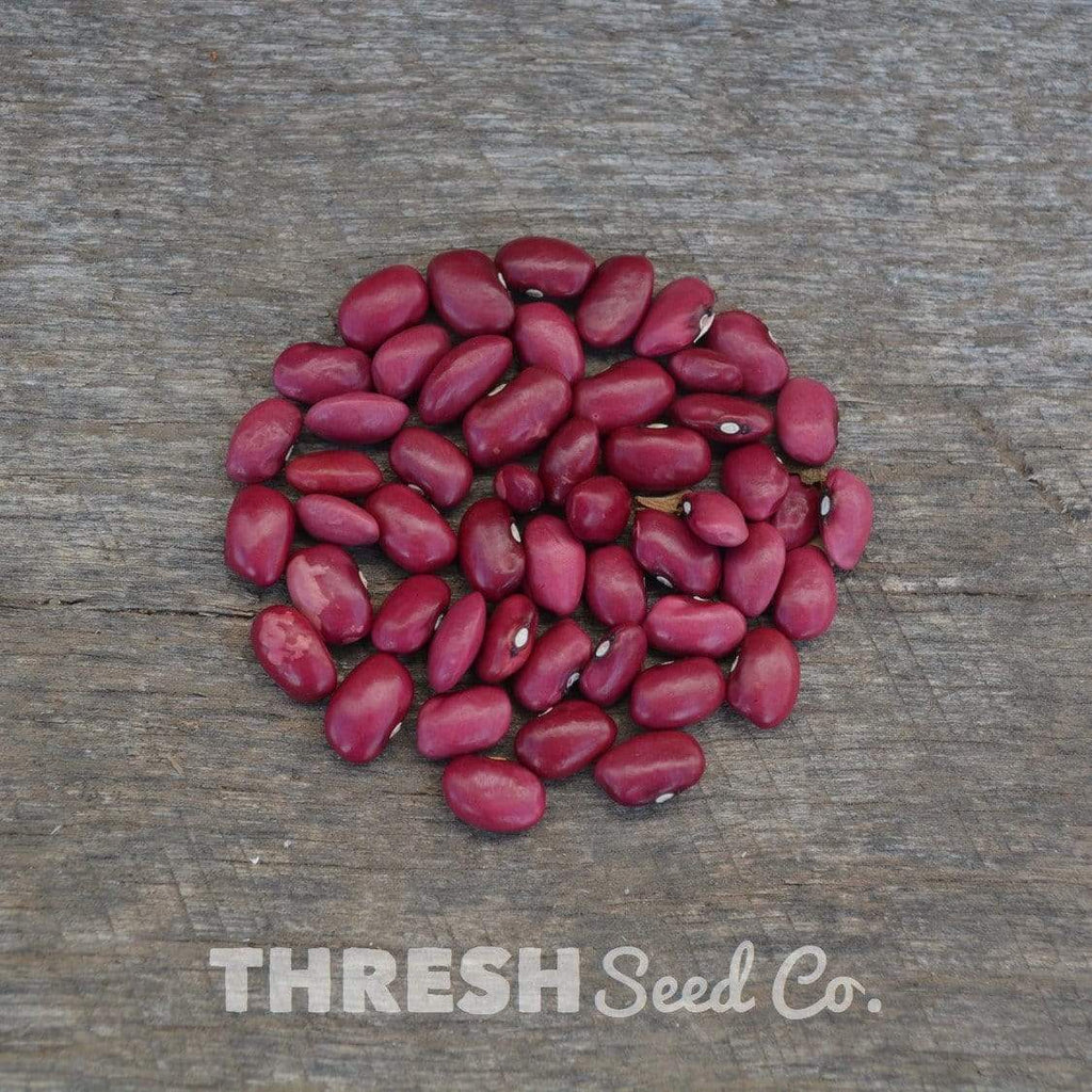 Hidatsa Red Shelling Bean pile