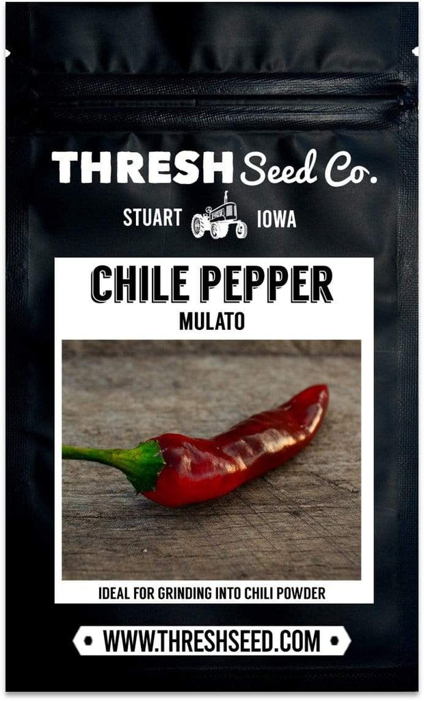 Mulato Chile Pepper Seeds