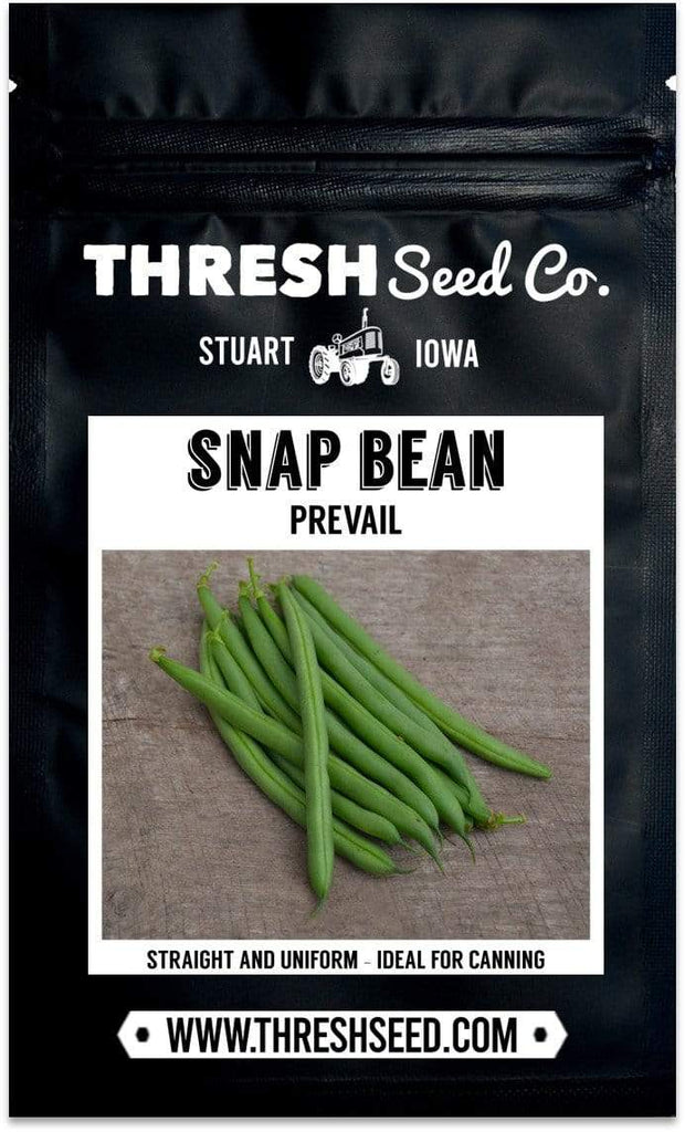 Prevail Snap Bean Seeds