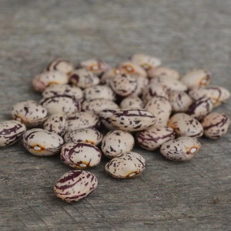 Speckled Cranberry Shelling Bean Seeds