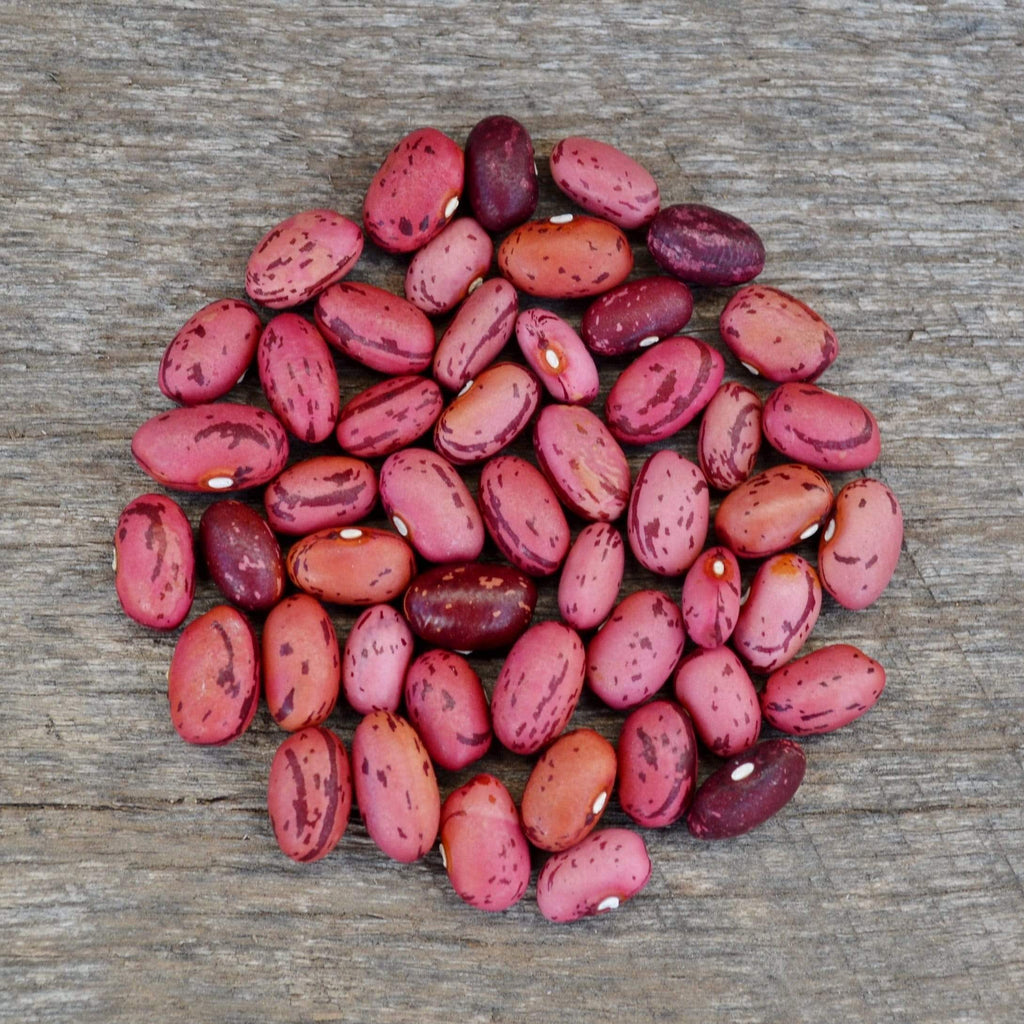 Vermont Cranberry Shelling Bean Seeds