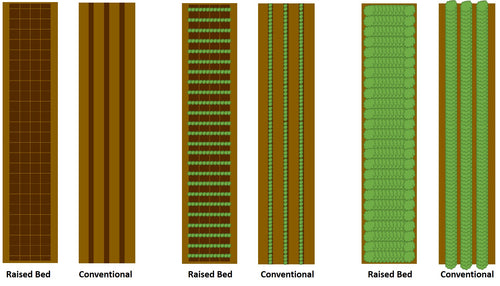 comparison of raised beds and conventional beds