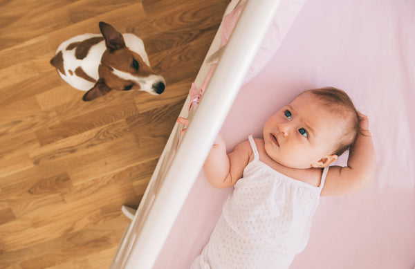 baby with dog