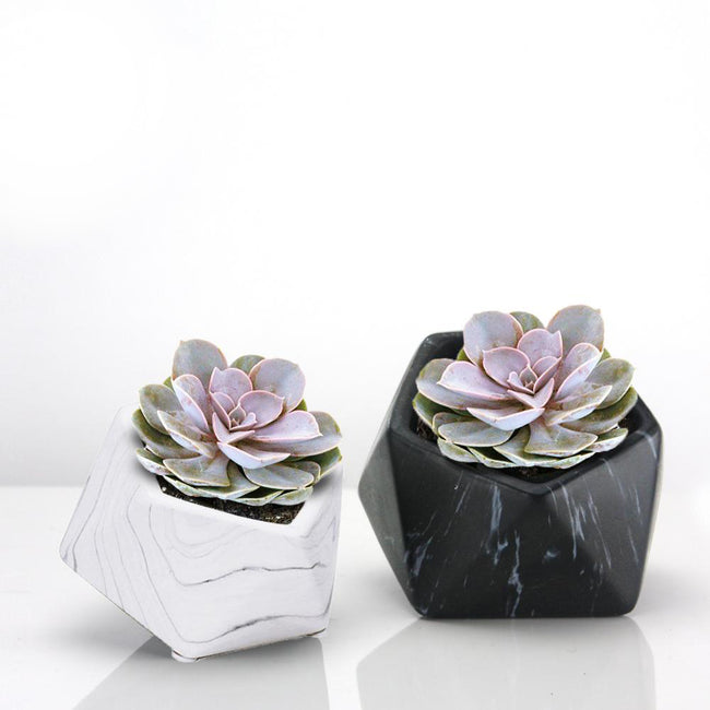 Indoor Ceramic Marble Planter Sets
