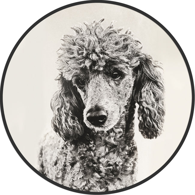 Circular (Round) Wall Art / Wall Decor - Poodle