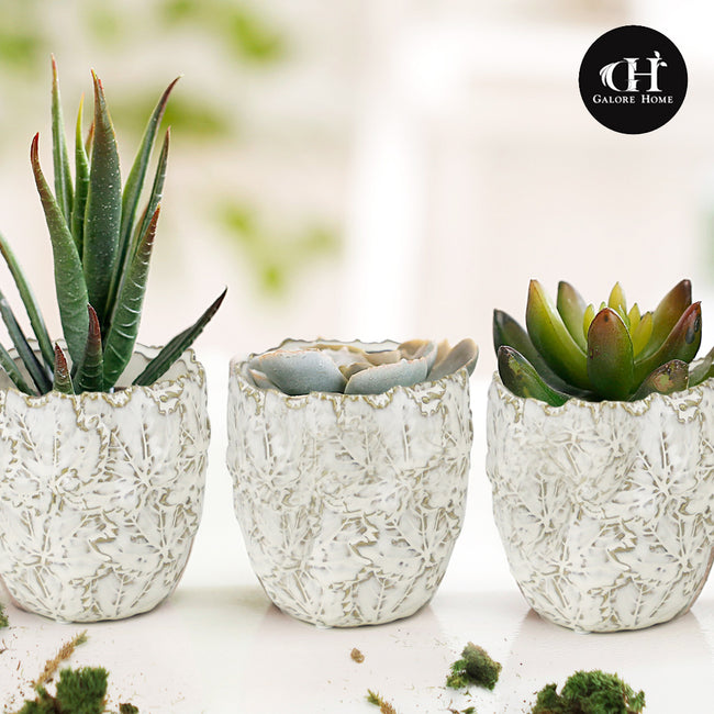 Indoor Ceramic Pot Set