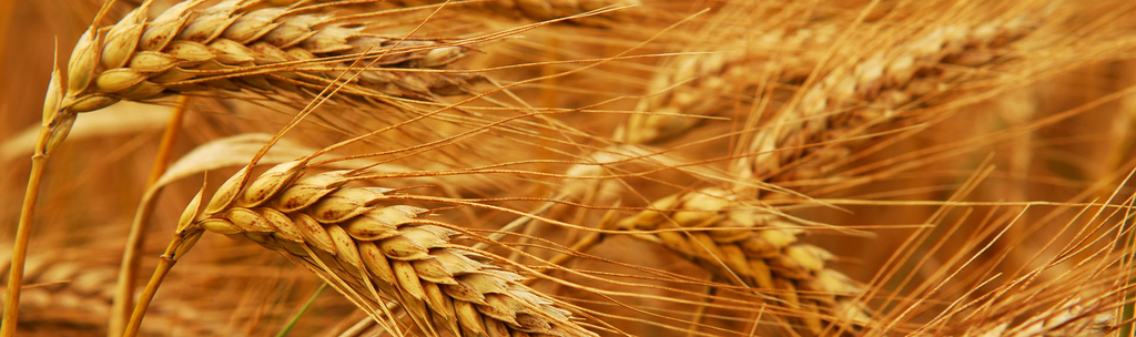 Most of us are ignorant of our Gluten intolerance