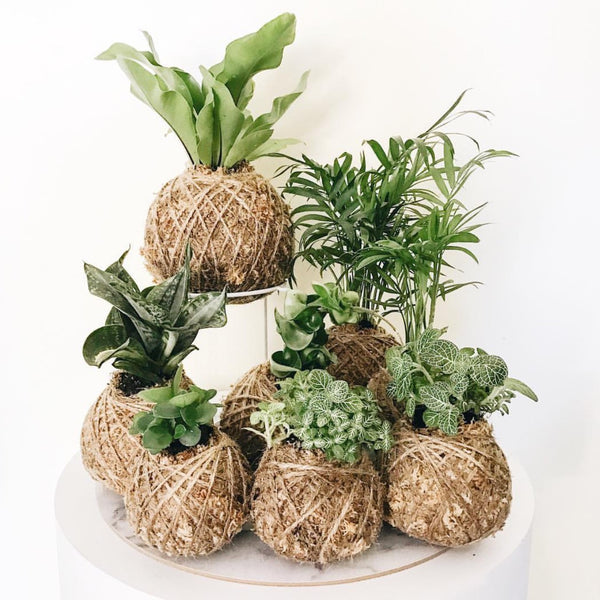 Kokedama Workshop Sydney