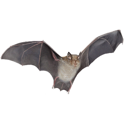 bat boxes - Bat Image