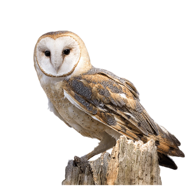 Owl Nest Boxes Direct