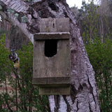 Predated nest box