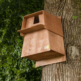 Barn Owl Nest Box on tree