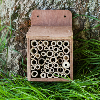 bee house for solitary bees and other insects