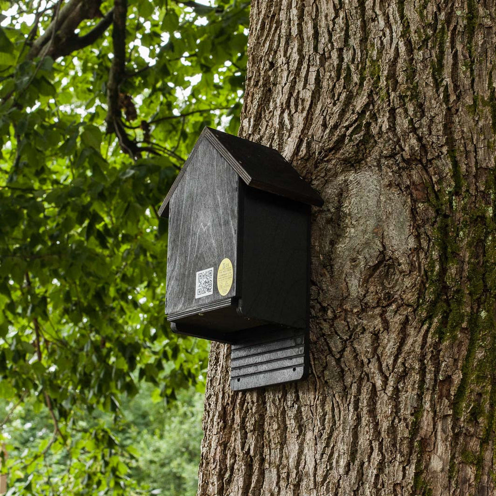 Cavity Bat Box for brown long eared bats