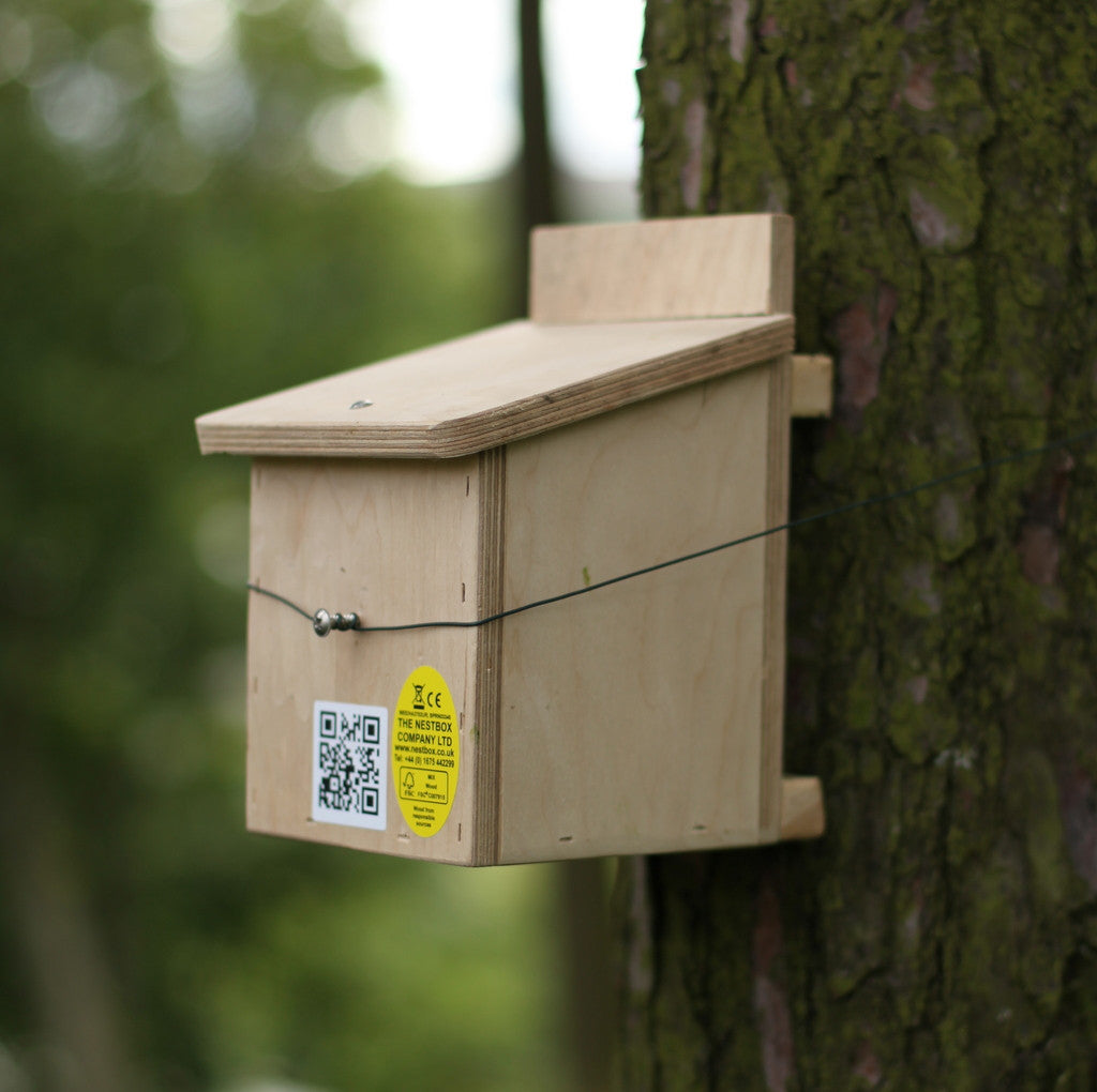 dormouse nest box on tree