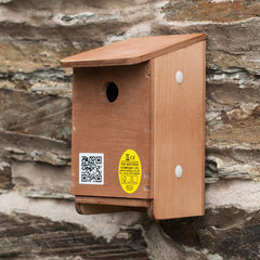 house sparrow nest modular construction