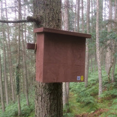Pine Marten box fitted in woodland