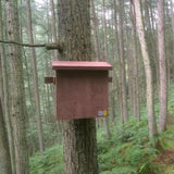 pine marten den mounted on tree