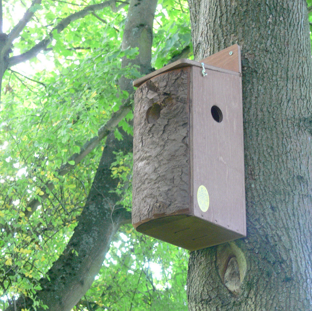 Red Squirrel Nest Box mounted on tree