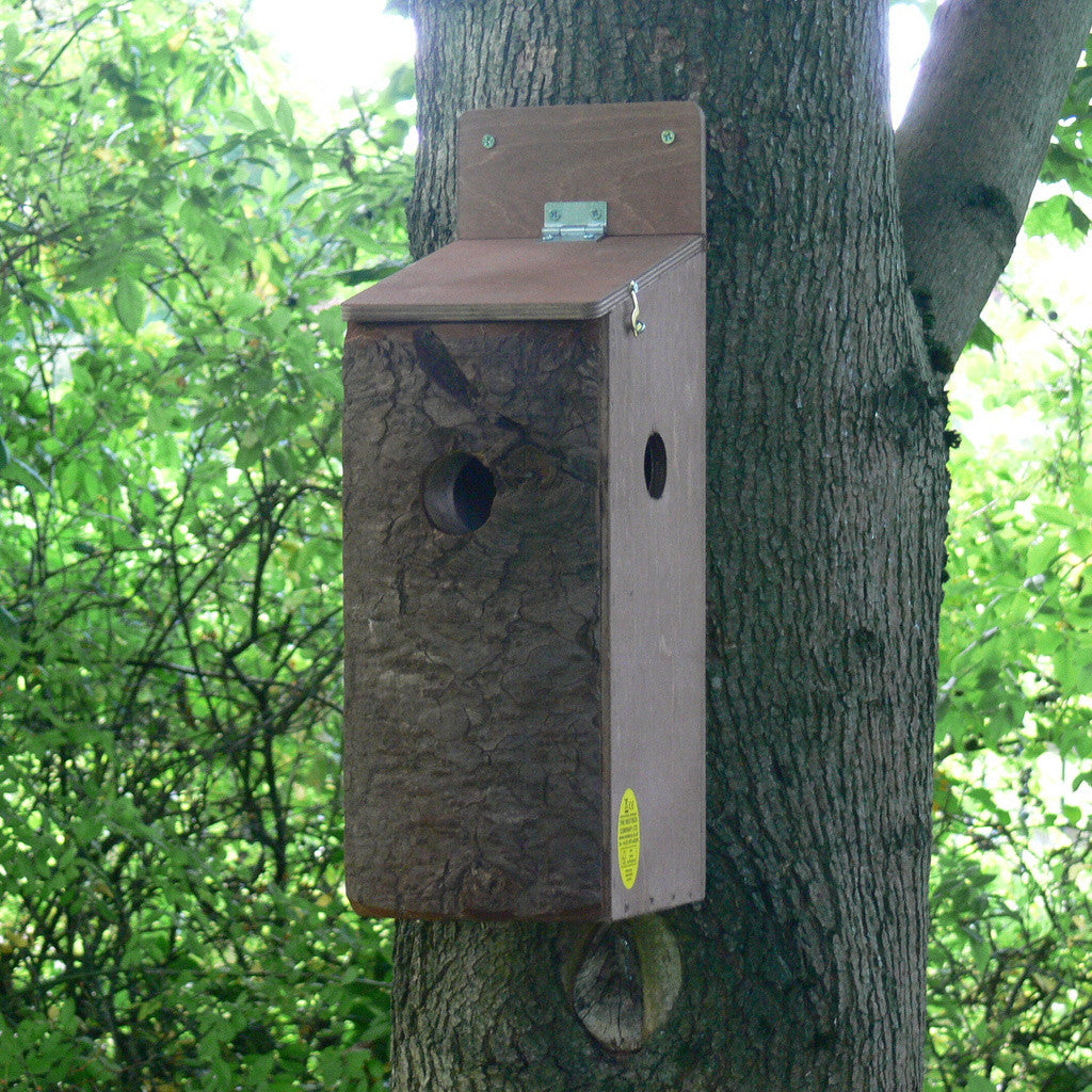 Red Squirrel box with 2 entrances