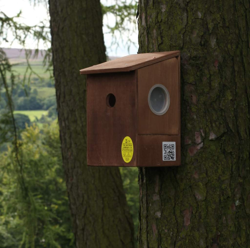 second nest box for your camera bird box