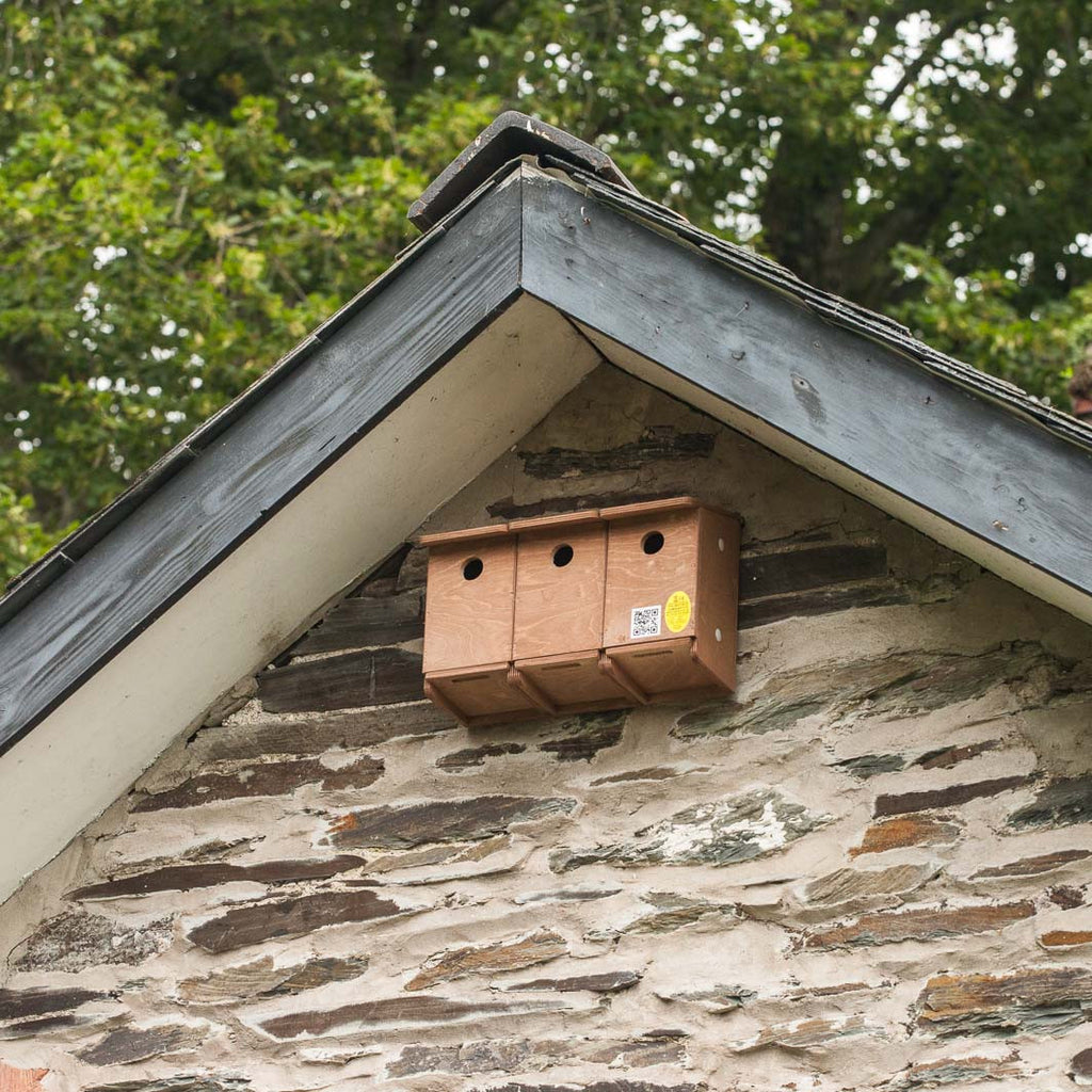 Sparrow Terrace Nest Box high on wall under eaves
