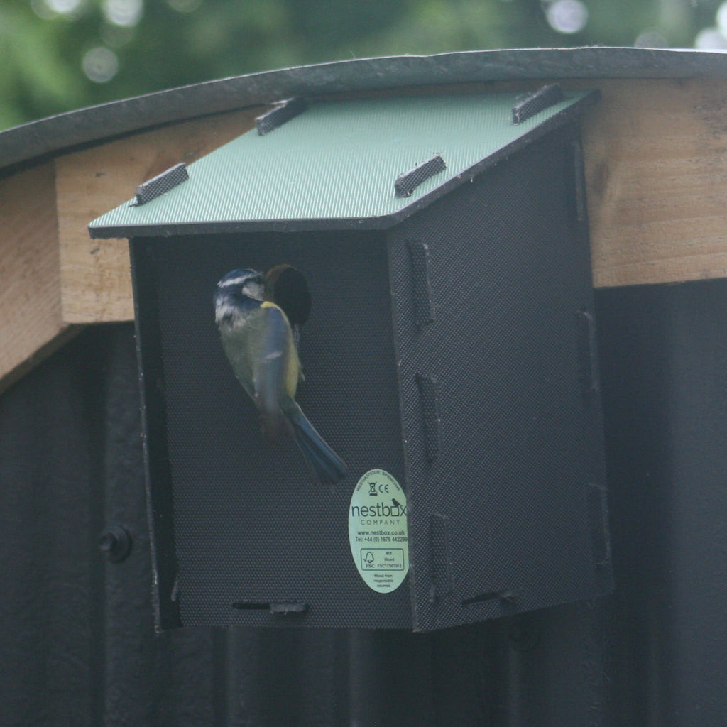 Blue tit eco bird box
