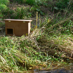 Duck nest box by water