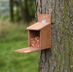 Squirrel feeder with supply of nuts