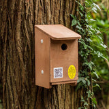 tree sparrow nesting box mount several close by