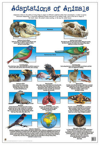 CHART ADAPTION OF ANIMALS