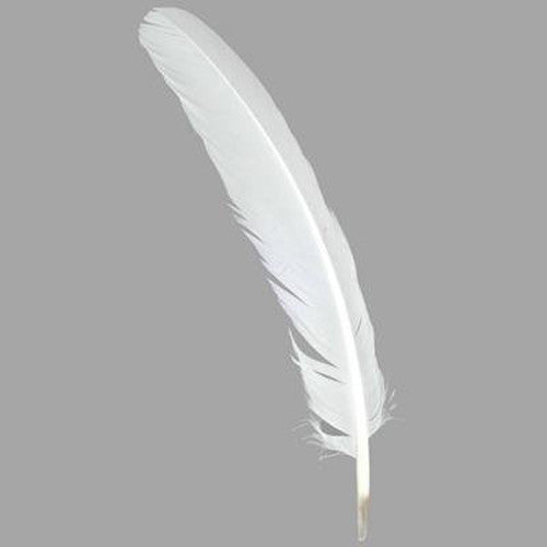 Quill Feather - 12 stk