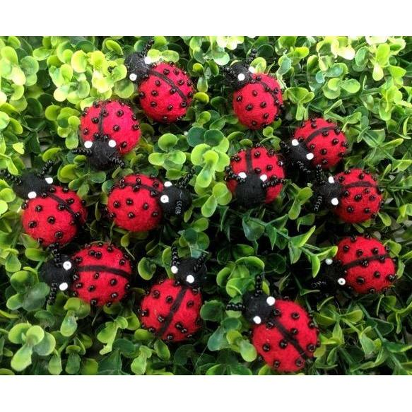 Himalayan Journey Lady Bugs