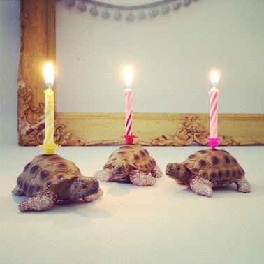 Tortoise Glittery Candle Holder