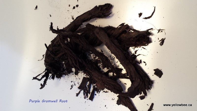 Purple Gromwell Root - 50gm (While Stock Last)
