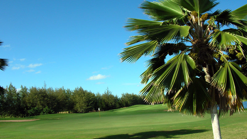 Hawaii Prince Golf Club greens