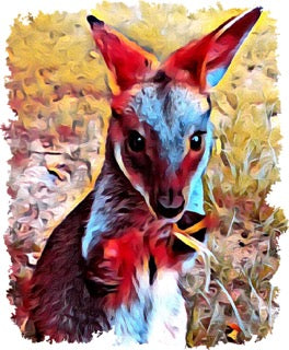 Sublimation Transfer : Poppy the Wallaby