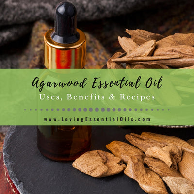 Agarwood Essential Oil Benefits and Uses (Oud Oil) - EO Spotlight