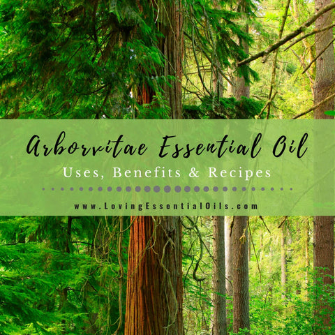 Arborvitae Oil Uses, Benefits & Recipes - EO Spotlight