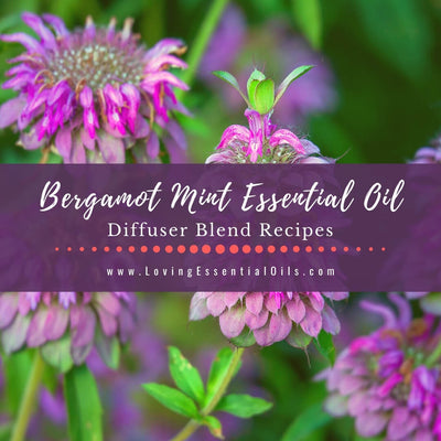 Bergamot Mint Diffuser Blends - Essential Oil Benefits & Recipes