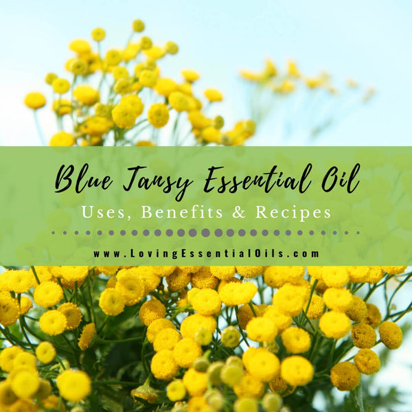 Blue Tansy Essential Oil Uses, Beneifts & Recipes - EO Spotlight